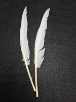 Перо птицы (белый) PK1-35-38-1
