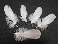 Перо лебедя PL5-13-1-10шт (белый)